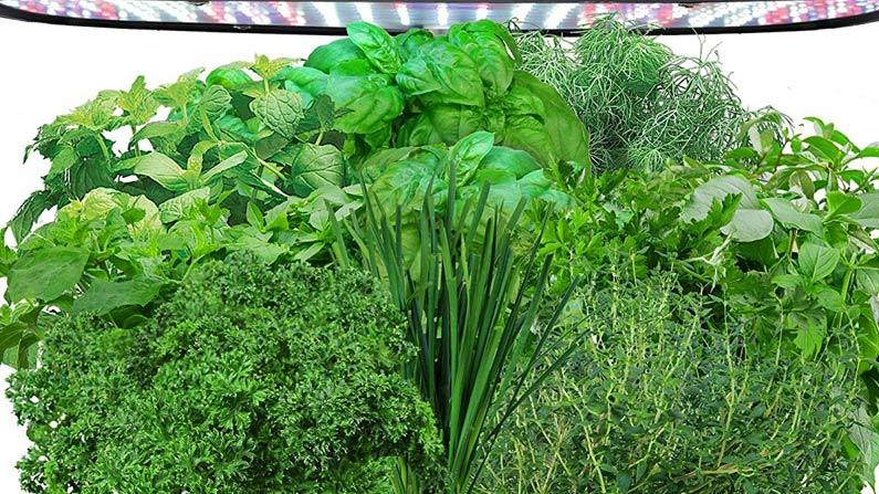 A Few Hydroponics Gardening Tips