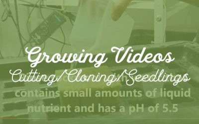 Cuttings/Cloning/Seedlings